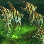 熱帯魚水槽の立ち上げ方と日々の世話