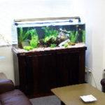熱帯魚水槽の最適な設置場所