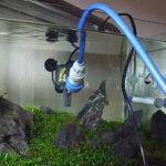水槽の水換え 必要性と水換え頻度