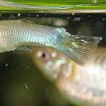 熱帯魚の病気の発見方法
