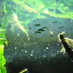油膜対策に必見!!水槽に発生する油膜の原因と影響から除去・対策・取り方