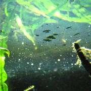 水面に浮かぶ油膜