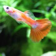 熱帯魚のエサやり