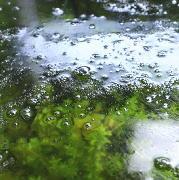 水槽の泡立ち 水面から泡が消えない 気泡の原因と対策