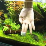 水槽の掃除とコケ対策