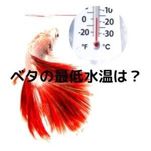 ベタの最低水温